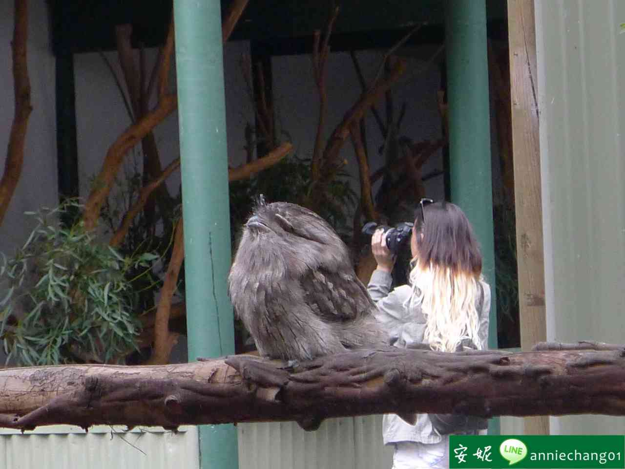 【澳洲 雪梨】Featherdale Wildlife Park野生動物園
