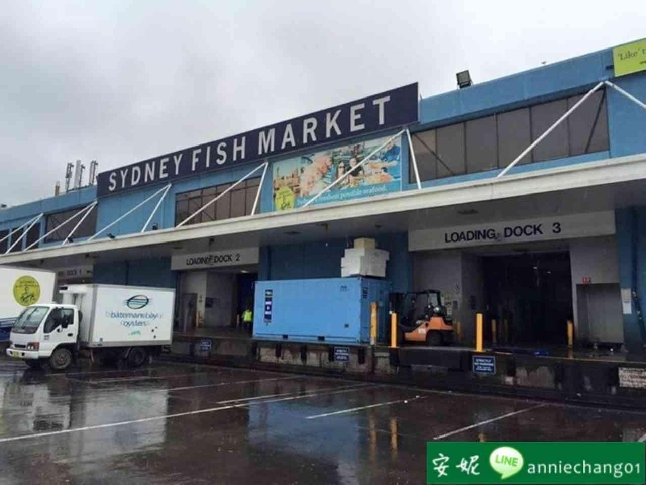 【澳洲 雪梨】魚市場