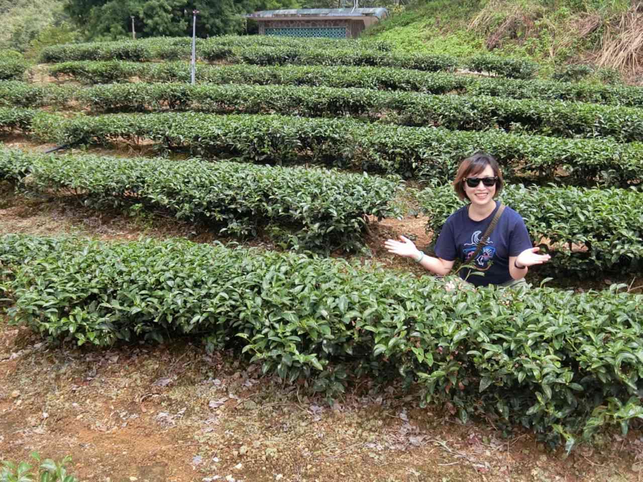【宜蘭】玉蘭茶園